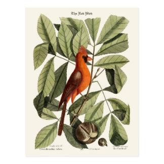 The Red Bird Postcard