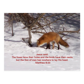 The Red Fox Postcard