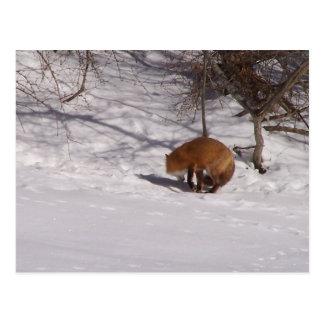The Red Fox Postcard