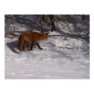 The Red Fox Postcards