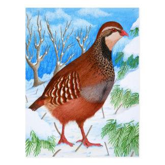 The Red-Legged Partridge Postcard