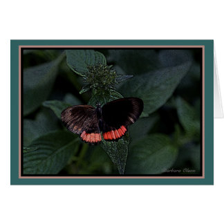 The Red Rim or Crimson Banded Black Butterfly Card