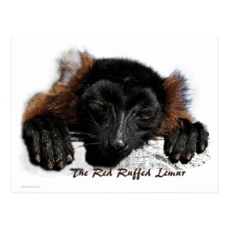 The Red Ruffed Lemur Post Card