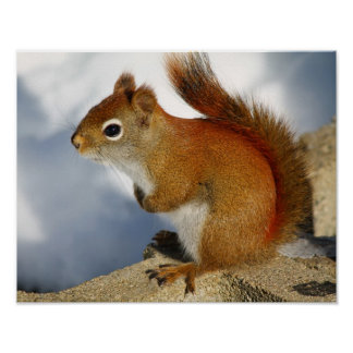 The Red Squirrel Who Stuck Around Poster