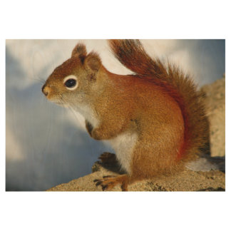 The Red Squirrel Who Stuck Around Wood Poster