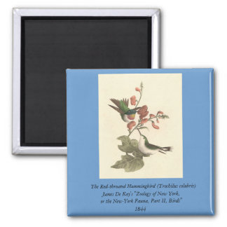 The Red-throated Hummingbird (Trochilus colubris) 2 Inch Square Magnet