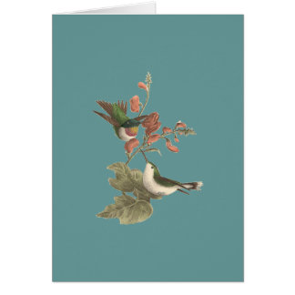 The Red-throated Hummingbird (Trochilus colubris) Greeting Card