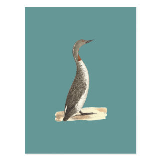 The Red-throated Loon(Colymbus septentrionalis) Postcard