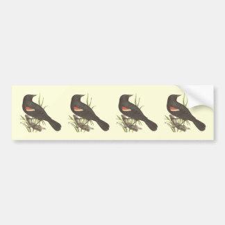 The Red-winged Oriole(Icterus phoeniceus) Bumper Sticker