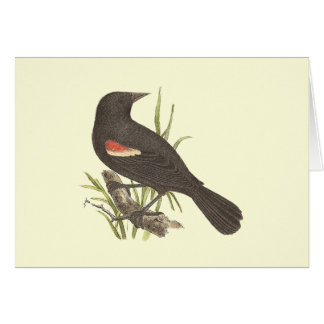 The Red-winged Oriole(Icterus phoeniceus) Greeting Card