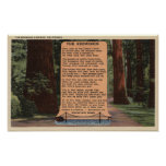 The Redwood Highway, Poem by Strauss Poster
