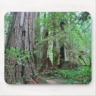 The Redwoods - Sequoia Mouse Pad