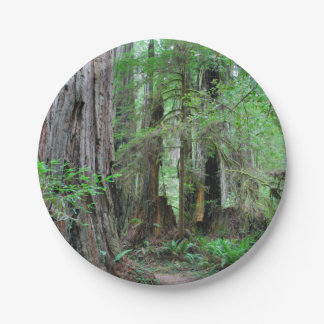 The Redwoods - Sequoia Paper Plate