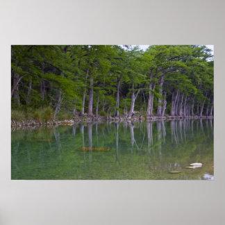 The Reflective Treeline Print
