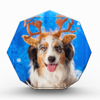 The Reindeer Award