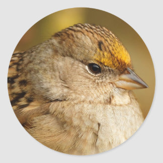 The Resilience of One Golden-Crowned Sparrow Classic Round Sticker