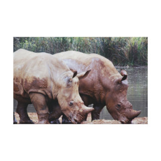 The rhino babies are growing up canvas print