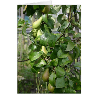 The ripening pears card