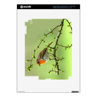The Robin Decal For iPad 3