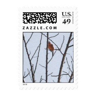 The Robin Postage Stamp