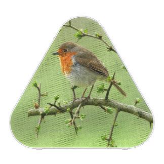 The Robin Speaker