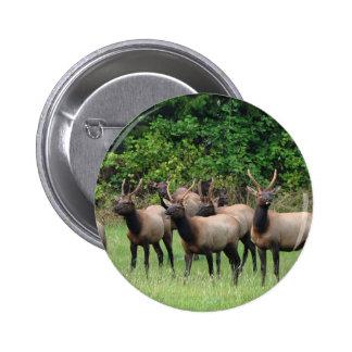 The Roosevelt Elk Herd Button