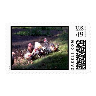 The Rooster Gang Postage