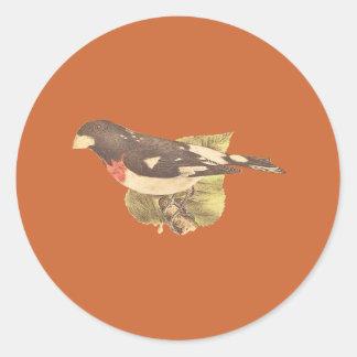 The Rose-breasted GrosbeakCoccoborus ludovicianus Classic Round Sticker