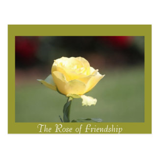 The Rose of Friendship Postcard