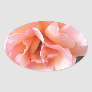 the rose oval sticker