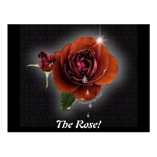 The Rose! Postcard