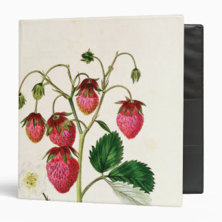 The Roseberry Strawberry, engraved by Watte 3 Ring Binder
