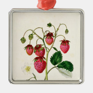 The Roseberry Strawberry, engraved by Watte Metal Ornament