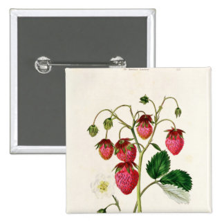 The Roseberry Strawberry, engraved by Watte Pinback Button