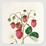 The Roseberry Strawberry, engraved by Watte Square Sticker