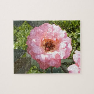 The Roses Pink Puzzle