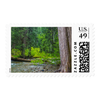 The Ross Creek Cedars Scenic Area Postage Stamp