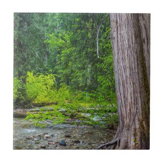 The Ross Creek Cedars Scenic Area Tiles