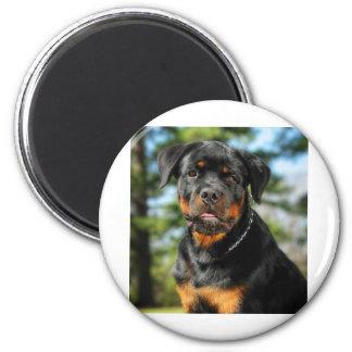 The Rottweiler Magnet