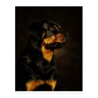 The Rotty Postcard