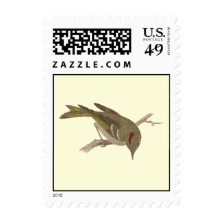 The Ruby-crowned Kinglet(Regulus calendula) Stamps