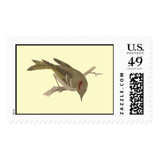 The Ruby-crowned Kinglet(Regulus calendula) Postage