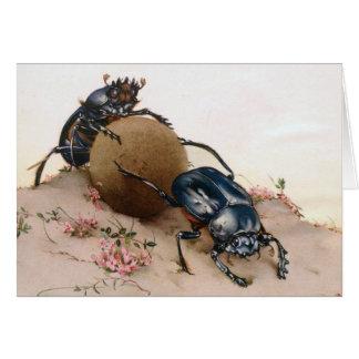 THE SACRED BEETLE 2 CARD