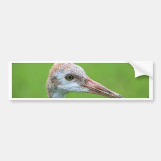The Sandhill Crane Teen Bumper Sticker