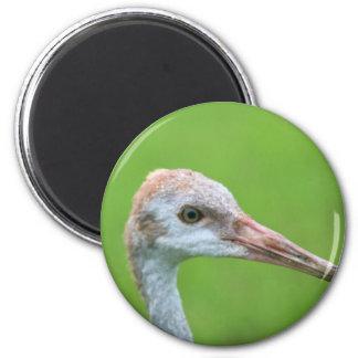 The Sandhill Crane Teen Fridge Magnets