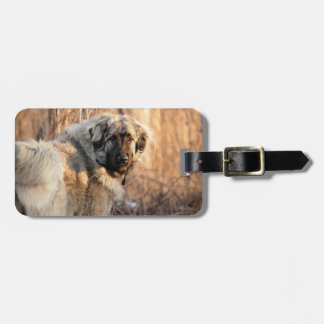 The Sarplaninac Dog Luggage Tag