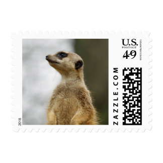 The Scout, cute Meerkat Stamps
