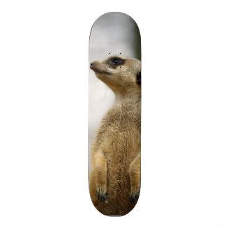 The Scout, cute Meerkat Skate Deck