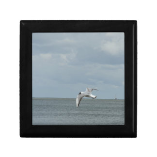 The sea gull and the sea gift box