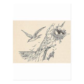 The Sea Gulls Postcard